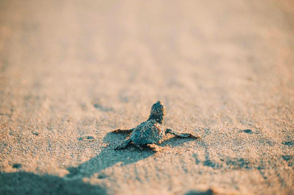 Banwa-turtles