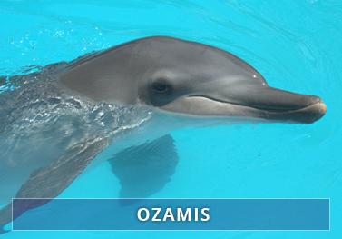 Ozamis